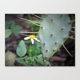 prickly pear cactus and white wildflower Canvas Print