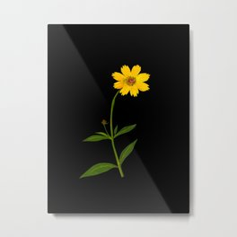 Mary Delany Botanical Vintage Flower Floral Collage Coreopsis Lanceolata Metal Print