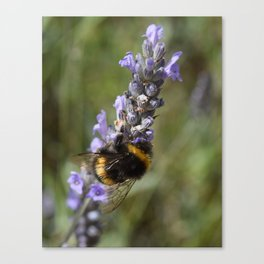 Bee & Lavender Canvas Print