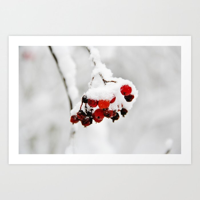 Bunch of red berries in winter Art Print