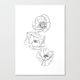 Botanical illustration line drawing - Poppies Canvas Print
