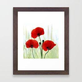 Poppies red 008 Framed Art Print
