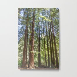 Redwood Grove Metal Print