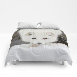 Fixated Comforters