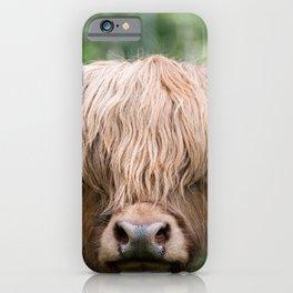 Portrait of a cute Scottish Highland Cattle iPhone Case