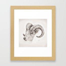 BOUC Framed Art Print
