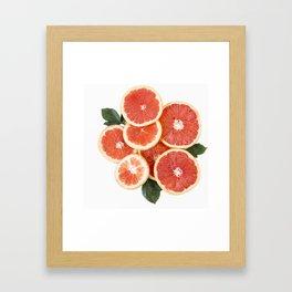 Grapefruit & Roses 01 Framed Art Print