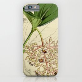 Flower 4650 medinilla sieboldiana Siebold s Medinilla1 iPhone Case