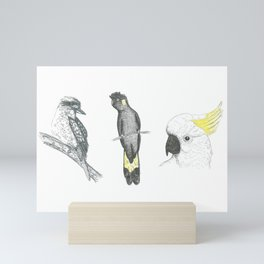 Australian Native Birds - Series 1 - Kookaburra, Black Cockatoo, Sulfur Crested Cockatoo Mini Art Print