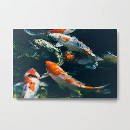 Koi Fish In Water Metal Print