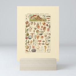 Seashell Diagram // Mollusques by Adolphe Millot 19th Century Science Textbook Artwork Mini Art Print