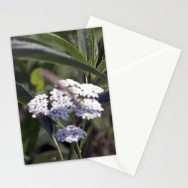 Longwood Gardens - Spring Series 223 Stationery Cards