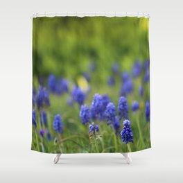 Grape Hyacinth in Spring Shower Curtain