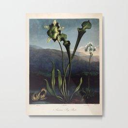 Robert Thornton - Carnivorous pitcher plant Metal Print