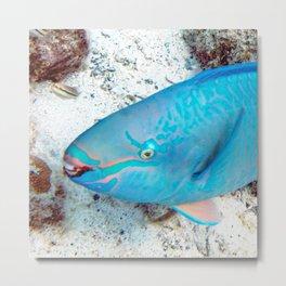 Watercolor Fish, Queen Parrotfish 01, St John, USVI, Coral Reef Savers Metal Print