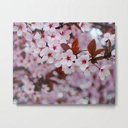 cherry plum candy Metal Print