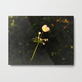 a solitary flower Metal Print