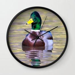 Male Mallard Duck Wall Clock