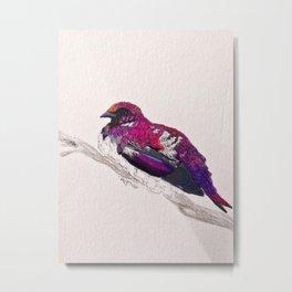 Birds: Starling Series | Southern Amethyst Starling Metal Print