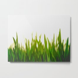Close Up Of Green Blades Of Grass Metal Print