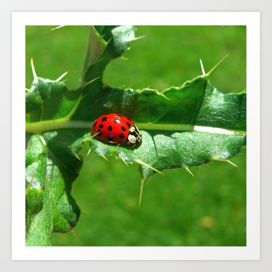 ladybug III Art Print