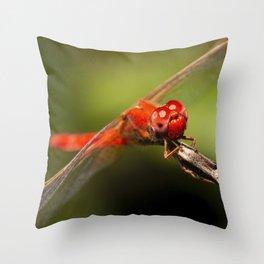 Scarlet Percher Dragonfly Throw Pillow