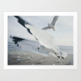 Seagull {Six} Art Print