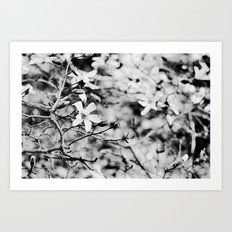 Blooms and Buds Art Print