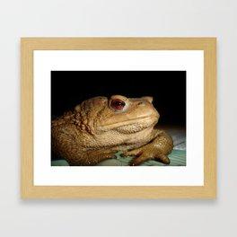 Common European Toad, Bufo Bufo Framed Art Print