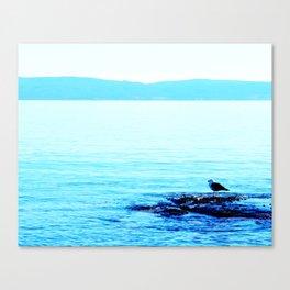 One Vigilant Gull Canvas Print
