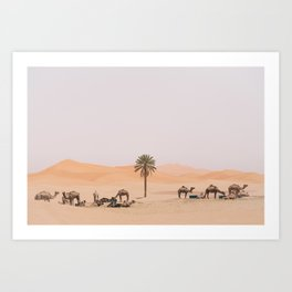 Sahara Camels Art Print