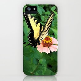 Butterfly on Zinnia 4 iPhone Case