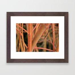Dogwood In Winter Framed Art Print