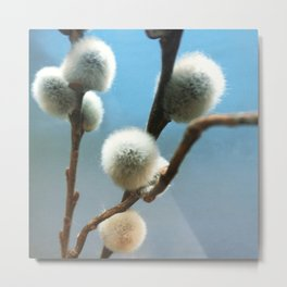 pussy willow branches 2 Metal Print
