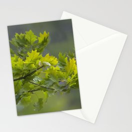 Northern Red Oak Leaves Stationery Cards