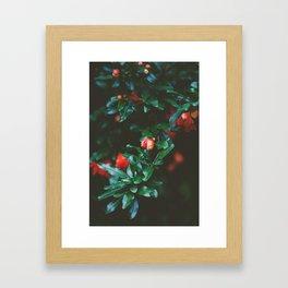 Pomegranate Study, No. 1 Framed Art Print