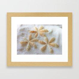 Seashells 4 Framed Art Print