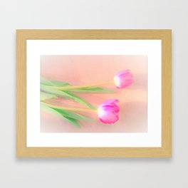 two pink tulips Framed Art Print