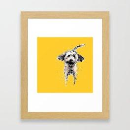 Labradoodle Larking! Framed Art Print