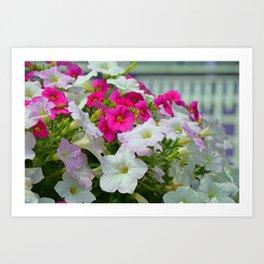 Pink and white petunias Art Print