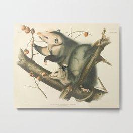 Vintage Illustration of Mother and Baby Possum - John James Audubon - 1840 Metal Print