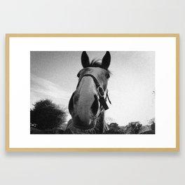 Horse from Ireland Framed Art Print