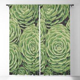 Succulents | Aeoniums | Garden Plants | Pot Plants | Blackout Curtain