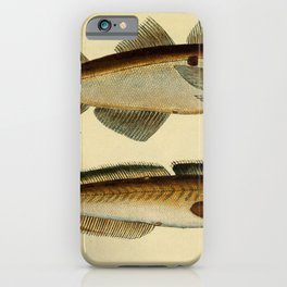 Illustrations and Descriptions of Fish (1787) - Haddock; Common Ling iPhone Case