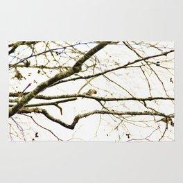 Redpoll birds in aspen tree Rug