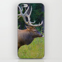 Bull Elk shows off his rack in Jasper National Park iPhone Skin