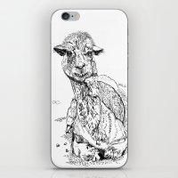 llama iPhone & iPod Skins featuring Llama by ARI(Sunha Jung)