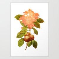botanical Art Prints featuring Botanical by CAB Architects