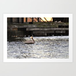 Lone Pelican in the Southern Branch of the Elizabeth River Art Print