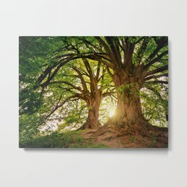 Magnificent Forest Metal Print